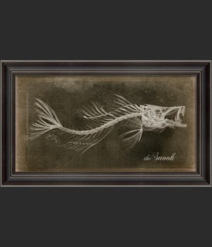 LS Snook Skeleton on Black