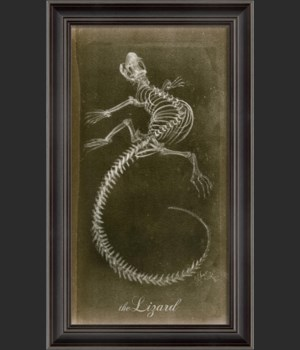 LS Lizard Skeleton on Black