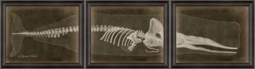 LS Sperm Whale Skeleton on Black