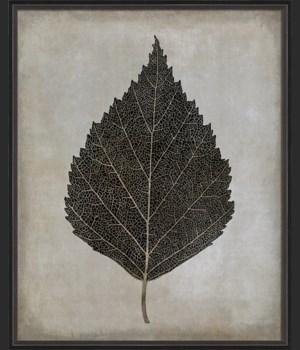 BC Birch Leaf b/w lg