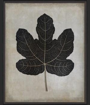 BC Fig Leaf b/w lg