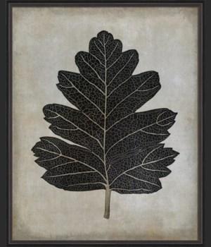 BC Hawthorn Leaf b/w lg