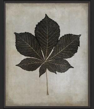 BC Horse Chestnut Leaf b/w lg