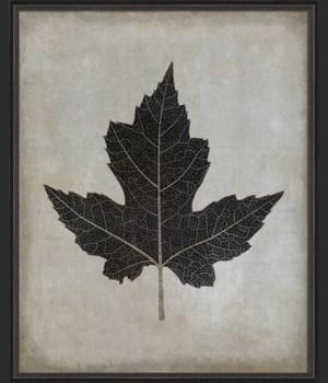 BC Maple Leaf No1 b/w lg