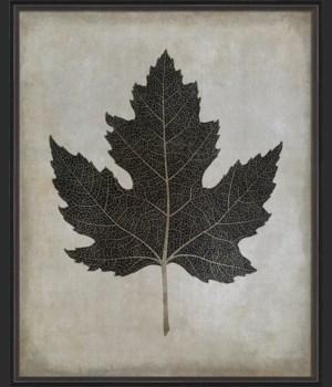 BC Maple Leaf No2 b/w lg