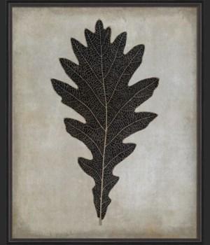 BC Oak Leaf b/w lg