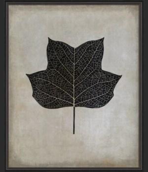BC Tulip Tree Leaf b/w lg