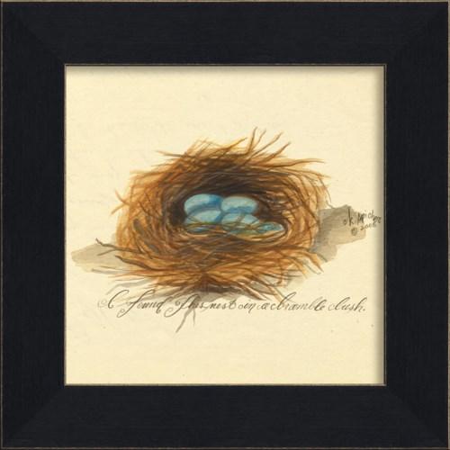 MI Nest Blue Eggs
