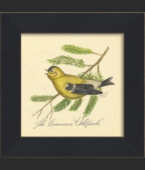 MI American Goldfinch