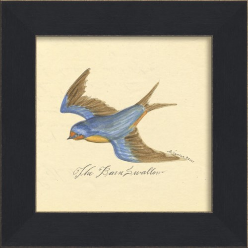 MI Barn Swallow