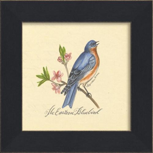MI Eastern Bluebird