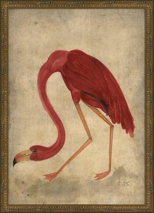 KG Flamingo