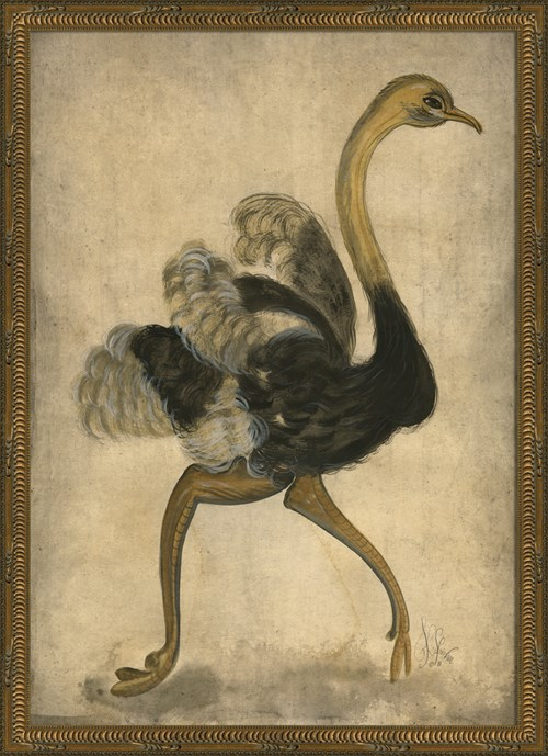 KG Ostrich