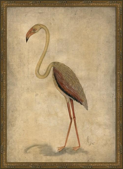 NT Pink Bird
