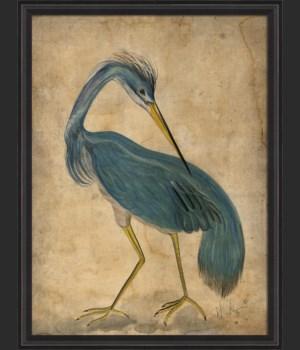BCBL Blue Bird