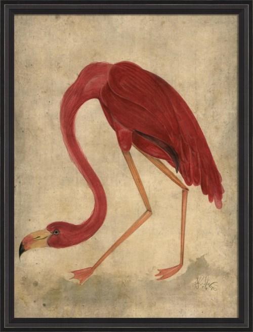BCBL Flamingo