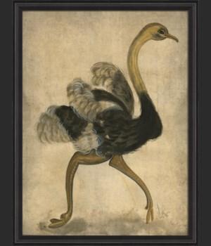 BCBL Ostrich