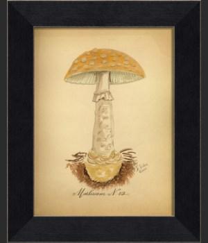 LI Mushroom 02