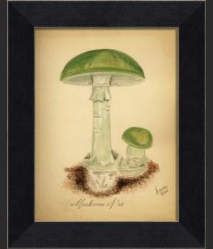 LI Mushroom 03
