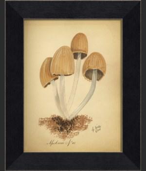 LI Mushroom 05