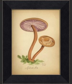 LI Mushroom 07