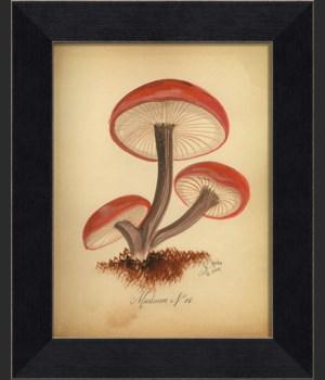 LI Mushroom 08