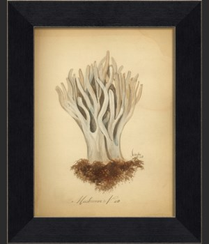 LI Mushroom 09