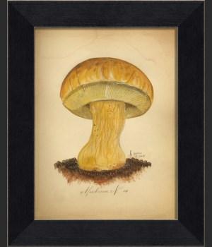 LI Mushroom 10