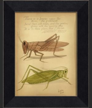 MI Grasshoppers 1837