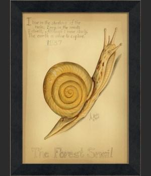 MI The Forest Snail