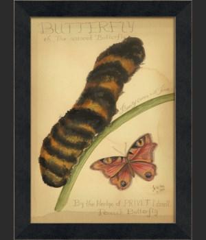 MI Peacock Butterfly