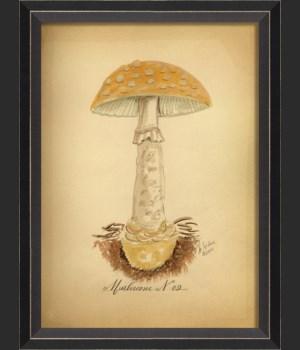 BC Mushroom 02 med