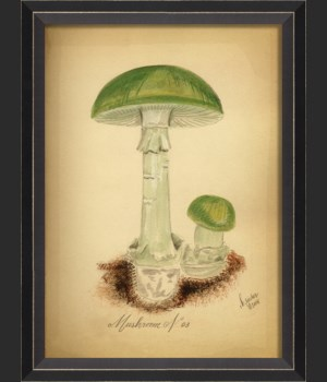 BC Mushroom 03 med