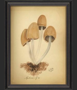 BC Mushroom 05 med