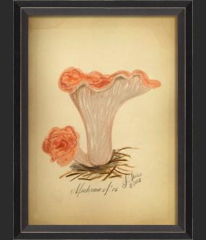 BC Mushroom 06 med