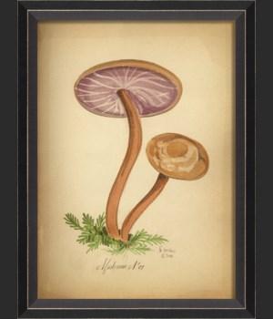 BC Mushroom 07 med