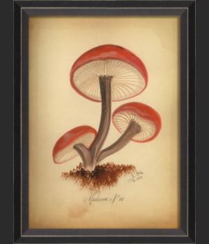 BC Mushroom 08 med