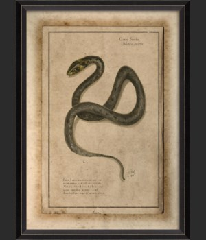 BC Grass Snake