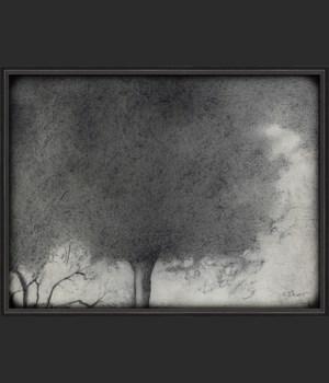 BC SJHunt Tree No16 lg