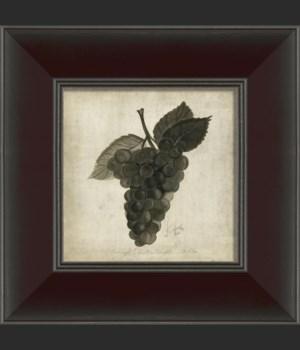 SN Grapes