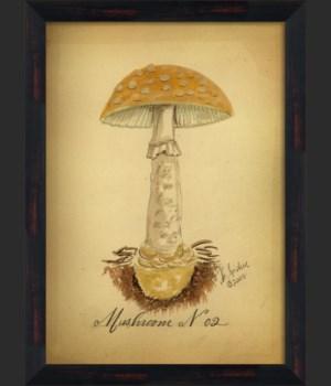 BC Mushroom 02 lg
