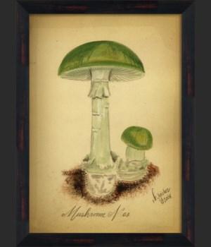 BC Mushroom 03 lg