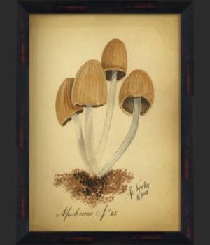 BC Mushroom 05 lg