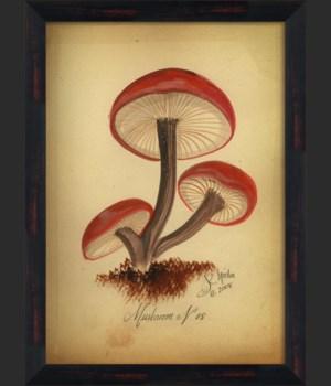 BC Mushroom 08 lg
