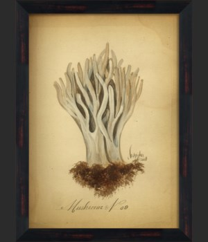 BC Mushroom 09 lg