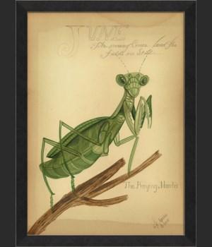 MI The Praying Mantis