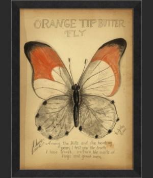 BC Orange Tip Butterfly