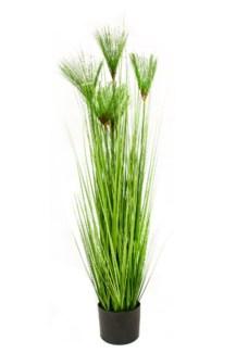"47"" Pine Needle"