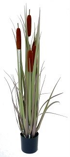 """Cattail Grass - 36"""""""