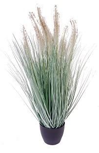 """Dogtail Grass - 23"""""""